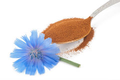 Blue chicory flower and powder of instant chicory Royalty Free Stock Image