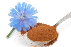 Blue chicory flower and powder of instant chicory Stock Images
