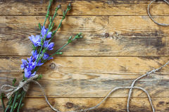 Blue chicory flowers tied with rope Stock Image