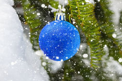 Blue Christmas ball on the fir branch covered snow. Christmas Background. Royalty Free Stock Photo