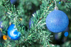 Blue christmas ball in pine tree Royalty Free Stock Photos