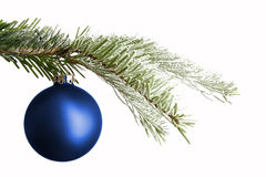 Blue Christmas ball on a snowy branch. Isolated in front of a white background Stock Image