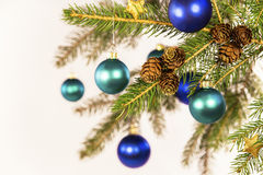 Blue christmas balls on a branch Royalty Free Stock Photo