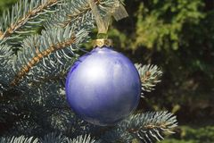 Blue Christmas Ornament. A Blue glass christmas ornament delicately balances on the end of a christmas tree branch royalty free stock images