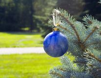 Blue Christmas Ornament. A Blue glass christmas ornament delicately balances on the end of a christmas tree branch royalty free stock photos