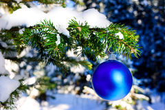 Blue Christmas ornament hanging on forest tree branch Royalty Free Stock Images