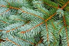Blue Christmas tree background. Stock Images