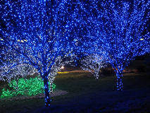 Blue Christmas Tree Pair. Photo of pair of christmas trees decorated with blue lights Stock Image