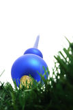 Blue christmas tree top . Royalty Free Stock Photo
