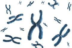 Blue chromosome. 3d rendering blue chromosome on white background stock image