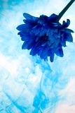 Blue chrysanthemum. Abstract chrysanthemum  flower on a white background with blue smoke Stock Photography