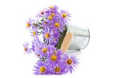 Blue chrysanthemum Royalty Free Stock Photo