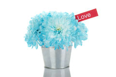 Blue chrysanthemums in a pail Stock Images