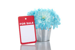 Blue chrysanthemums in a pail for sale Royalty Free Stock Photography
