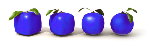 Blue citric fruit evolution Stock Image