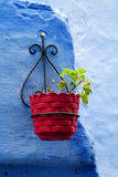 Blue city wall with red flower pot Stock Photos