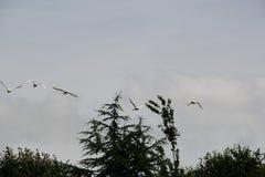 Birds in the sky Stock Image