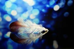 Blue, Close Up, Feather, Macro Photography Stock Photos