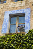 Blue closed window with decoration plant Stock Photo