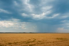 Blue clouds and rain over the yellow field. stock image