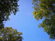 Blue clouds sky and green leaves. Blue clouds sky and green leaves stock images