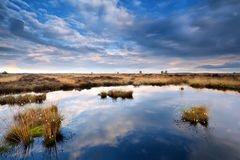 Blue cloudscape over swamp Royalty Free Stock Images