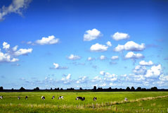Blue cloudy sky with cows. On a meadow in northern Germany royalty free stock image
