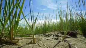 Blue sky grass up on the sandy beach royalty free stock photo