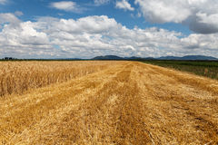 Blue cloudy sky over field of grain. Cloudy sky over field of grain and stubble royalty free stock image