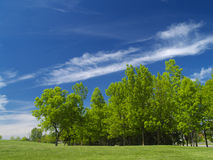 Blue cloudy sky in summer. Trees under the blue cloudy sky stock photo