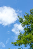 Blue cloudy sky with tree branches Royalty Free Stock Photos
