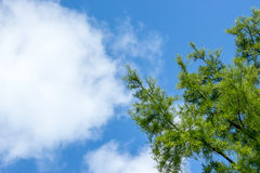 Blue cloudy sky with tree branches Stock Image
