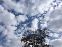 Blue cloudy sky, tree. Vladivostok nature. Blue cloudy sky, tree. Vladivostok nature, countryside Royalty Free Stock Image