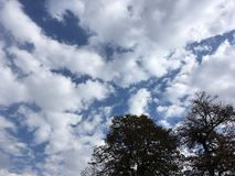 Blue cloudy sky, up view on trees. Vladivostok nature in early autumn, countryside Royalty Free Stock Photo