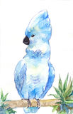 Blue cockatoo. Watercolor parrot, outline by hand. Stock Photos
