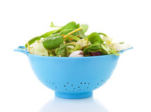 Blue colander with fresh lettuce Royalty Free Stock Photo