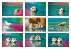 Collage with sea shell Stock Images