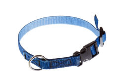 Blue collar for a small dog that. Is isolated on white stock images
