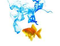 Blue Color Ink And Goldfish Stock Image