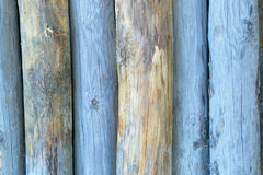 Blue colored tree stumps. Royalty Free Stock Image