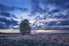 Twilight scene at a tranquil heath-land, Goirle, Netherlands. Blue colored twilight scene at a tranquil heath-land, Goirle, The Netherlands Royalty Free Stock Images