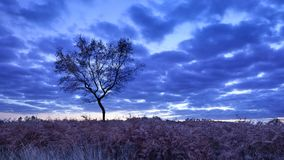 Twilight scene at a tranquil heath-land, Goirle, Netherlands. Blue colored twilight scene at a tranquil heath-land, Goirle, The Netherlands Royalty Free Stock Photos