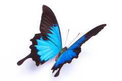 Blue and colorful butterfly on white background Stock Images