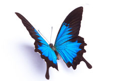 Blue and colorful butterfly on white background Royalty Free Stock Photography