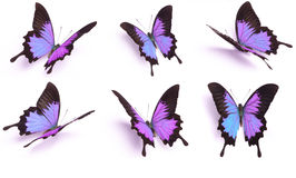 Blue and colorful butterfly on white background stock photography