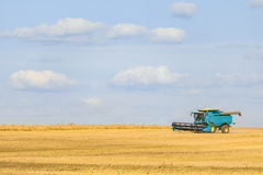 Blue combine harvester working on the harvest in a field. Agricultural background with copy space Royalty Free Stock Photo