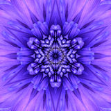 Blue Concentric Flower Center. Mandala Kaleidoscopic design Stock Image
