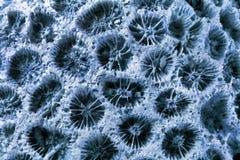 Blue coral closeup texture Stock Photo