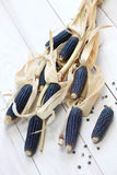Blue corn Stock Image