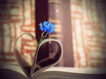 Blue cornflower and book pages Stock Photos